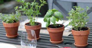 4 أعشاب تحمي دماغك من الاكتئاب والقلق وألزهايمر وتحسن الذاكرة