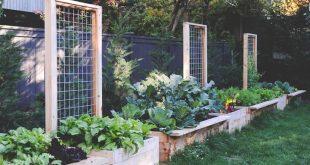 12 صنفا من الأطعمة يمكنك زراعتها بمنزلك أثناء الحجر المنزلي