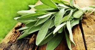علاج العقم والنقليل من التعرّق خلال فصل الصيف