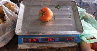 زراعة دمشق: أسعار البندورة ستهبط كثيراً وقد تصبح بـ100 ل.س