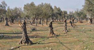 الارهاب يقطع 3.3 ملايين شجرة مثمرة في ريف دمشق