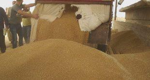 السورية للحبوب: الحرائق ستخفض إنتاج القمح المتوقع هذا الموسم
