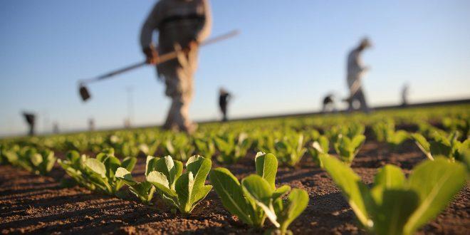 ما هي آثار قانون قيصر على قطاع الزراعة في سوريا؟