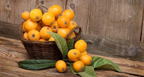 الأكيدنيا فاكهة ربيعية لذيذة وكلها منافع!