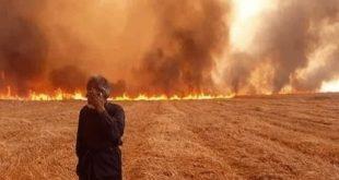 لماذا أمر ترامب بحرق مزارع القمح السورية وكيف سترد دمشق؟