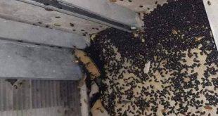 ما قصة الحشرات التي تغزو دمشق