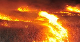 28 حريق في السويداء طالت أكثر من 5000 دونم من القمح والشعير