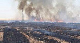الحرائق تسببت بأضرار لـ 6600 هكتار من القمح والشعير في الحسكة