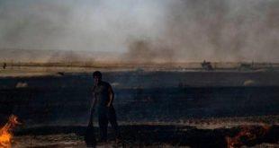 أوامر بحرق آلاف الهكتارات من حقول القمح في سوريا