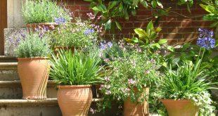 6 نبتات تبعد البعوض والحشرات بشكل طبيعي
