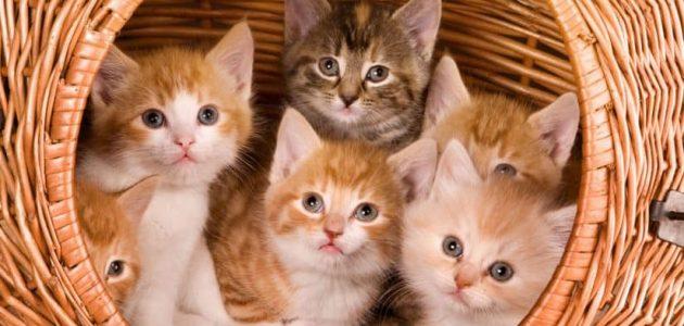 إنقاذ مئات القطط قبل تقديمها كطعام في فندق صيني