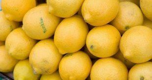١٤١ ألف طن إنتاجنا المحلي من الليمون .. فأين ذهب ليموننا من الأسواق؟