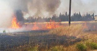 تضرر آلاف الدونمات الزراعية في حرائق درعا