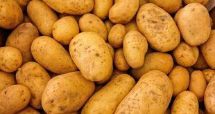تحذيرات من احتمال ارتفاع سعر البطاطا جراء تخزينها من قبل تجار لبيعها بأسعار مضاعفة