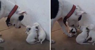 فيديو لكلب يوبخ صغاره الأربعة يحصد ملايين المشاهدات