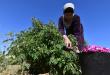 قرية سورية ينام فيها الثلج لتصحو الوردة الشامية