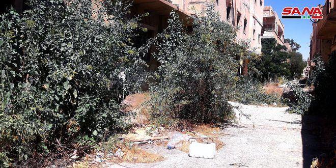 انتشار شجرة غريبة في تدمر تظهر للمرة الأولى في سورية