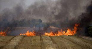 3158 دونم أضرار المحاصيل والأشجار المثمرة نتيجة الحرائق في حمص