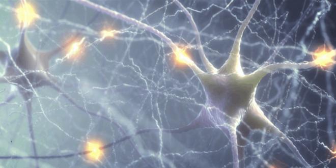 علماء يحولون الخلايا البشرية إلى شفافة في إنجاز مذهل!