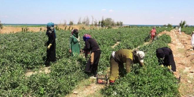 """الحكومة السورية تواجه قانون """"قيصر"""" بالزراعة .. لا خوف على رغيف الخبز"""