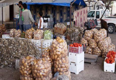 زيادة ملحوظة في تصدير الخضر والفواكه بمعدل 10 أضعاف