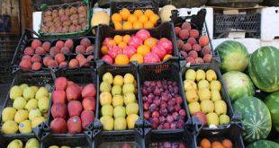 رئيس اتحاد غرف الزراعة: يجب عدم إيقاف تصدير الفواكه