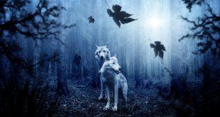 رؤية بعض الحيوانات في أحلامنا