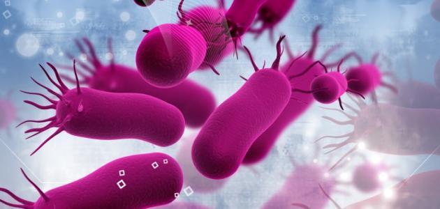 الأطعمة التي تحتوي على بكتيريا نافعة