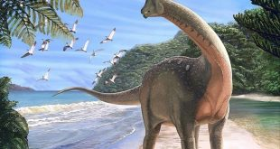 باحثون یحلون لغزا عمره 66 مليون عام