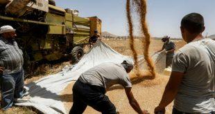 سوريا: نقص «حادّ» في القمح.