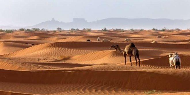 مثلث بهياكل بشرية... اكتشاف أثري غريب في السعودية