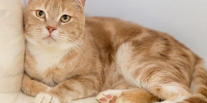 وفاة سيدة استرالية بسبب قطة