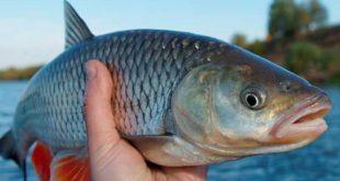 العثور على سمكة بعمر الـ 70 مليون سنة