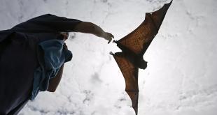 خفاش في حجم البشر يثير الرعب