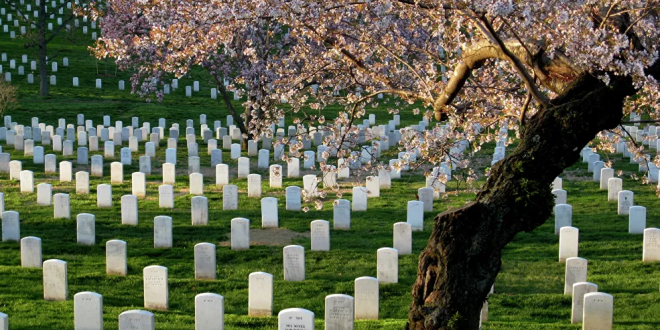 اختراع جورب يحول جسدك إلى شجرة بعد الوفاة