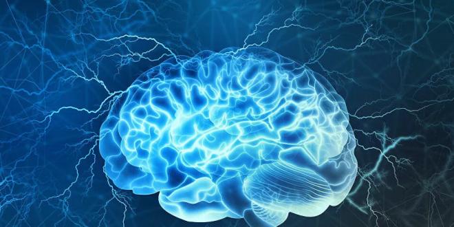 اكتشاف علمي كبير يمهد لفهم تعقيدات الدماغ البشري