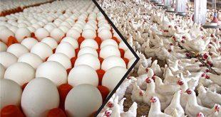 صحن البيض بـ 3500 والفروج بـ2800 ل. س
