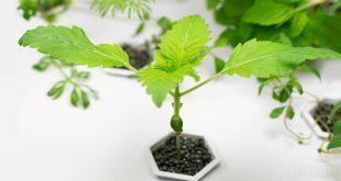 هل الزراعة دون تربة ممكنة؟ هيا نتعرف سويًا على الزراعة المائية