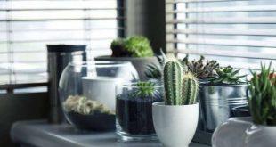 النباتات المنزلية .. وسائل طبيعية لتنقية