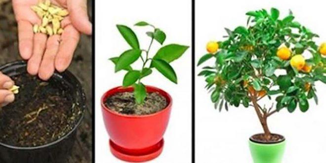 4 أشجار مثمرة تستطيعون أن تزرعوها