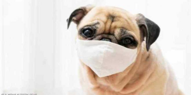 بعد أشهر من المعاناة ..وفاة أول كلب أصيب بكورونا في الولايات المتحدة