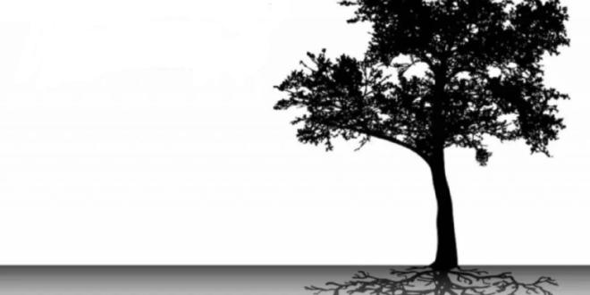 اختبار شجرة كارل كوخ Karl Koch