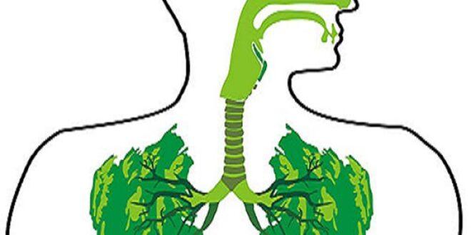 6 أعشاب تطهر الرئتين من السموم وتعالج كل مشاكل الجهاز التنفّسي
