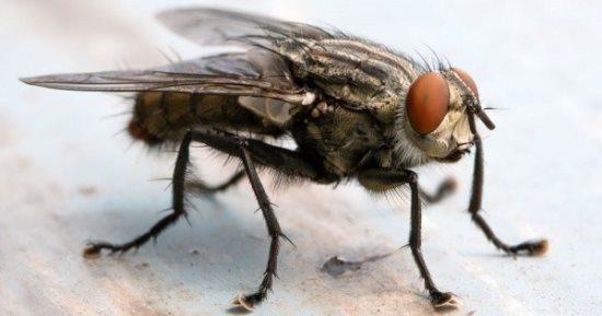 مطاردة ذبابة تتسبب بتدمير منزله!