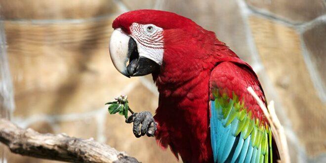 ببغاء يقلد صوت بيونسيه بشكل رائع في حديقة حيوانات.