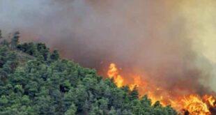 نبيل صالح يكشف: غرباء ملثمين على موتوسيكلات تشتعل الغابات بعد مرورهم فيها!