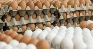 مدير زراعة يوضح سبب انخفاض أسعار البيض