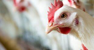 وزير الزراعة يقترح تأسيس شركة مساهمة لاستيراد الأعلاف