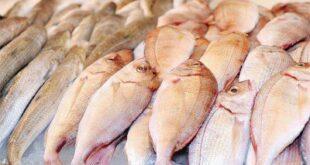 سورية تتحوّل بشكل غير مسبوق نحو توطين الثروة السمكية