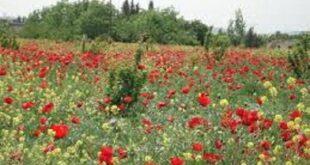 مشكلة صامتة تكبل تطور القطاع الزراعي في سورية